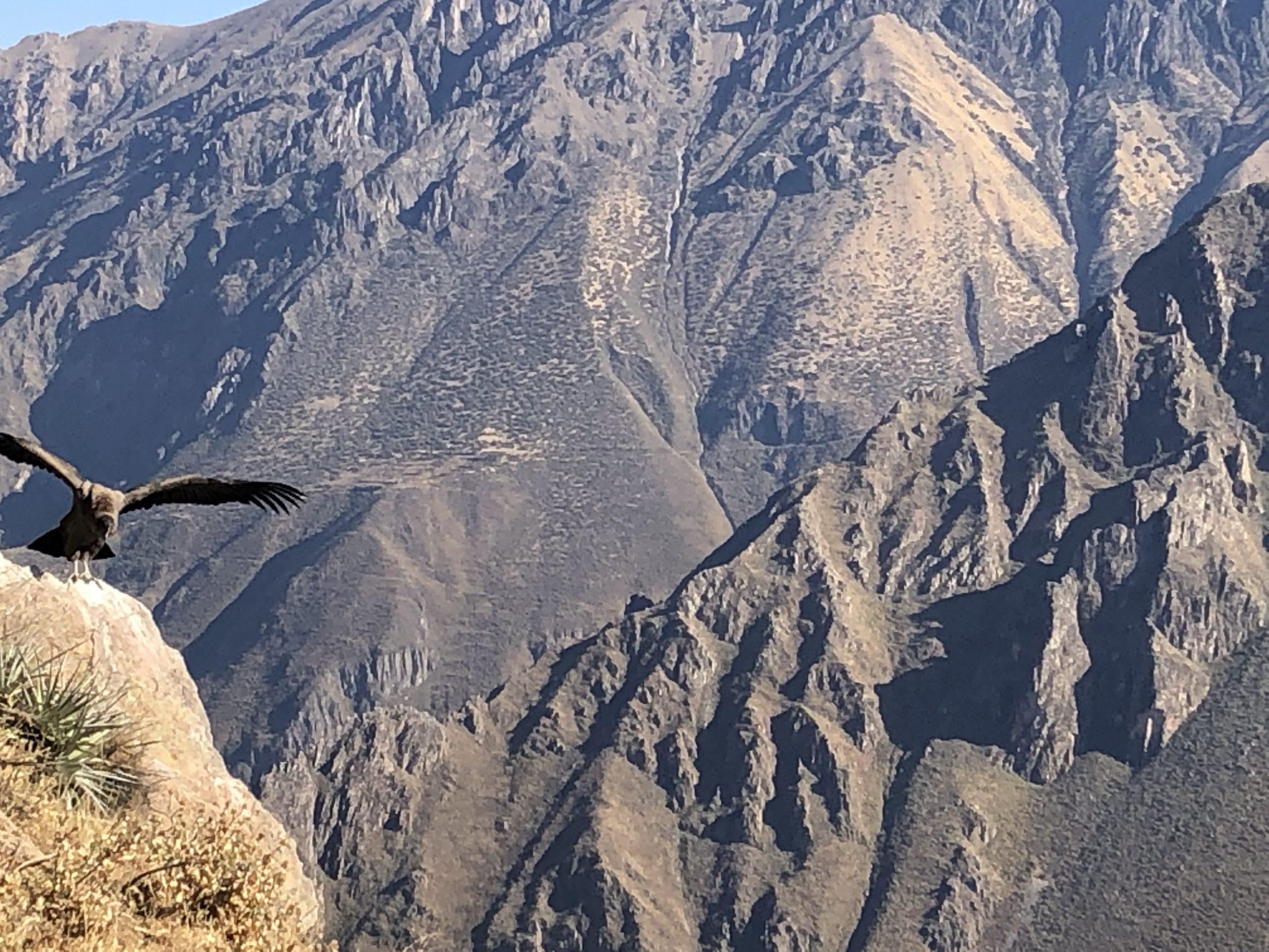 il volo dei condor